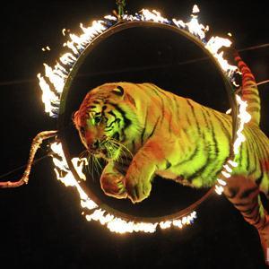 Цирки Нытвы