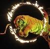 Цирки в Нытве